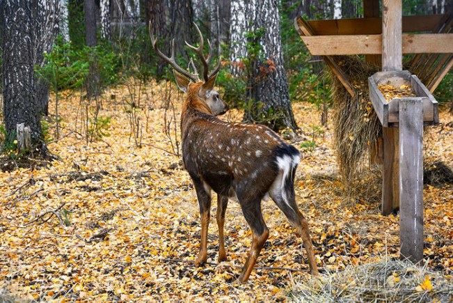 How to Choose a Deer Feeders