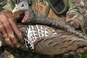 Collapsible Turkey Decoy