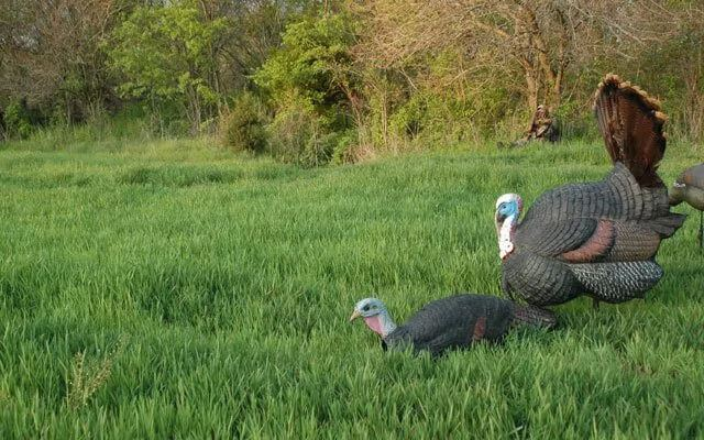 Turkey Decoy set up positions