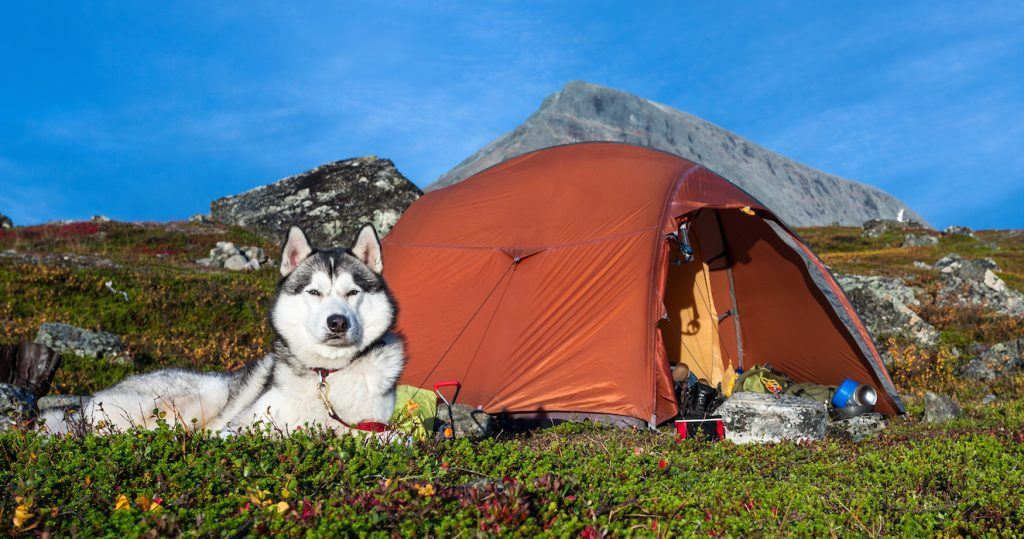 pets and camping