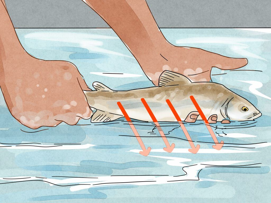 Other Tips to Keep Fish Alive