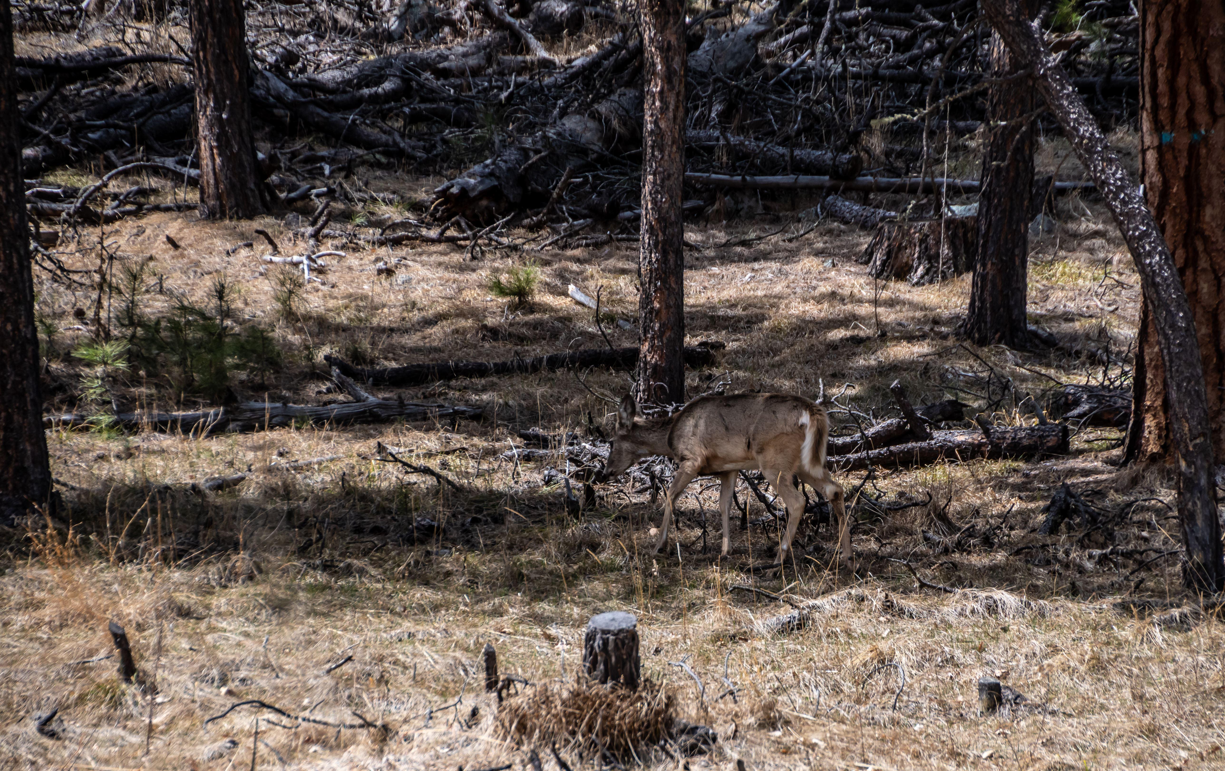 Deer Scouting Tips