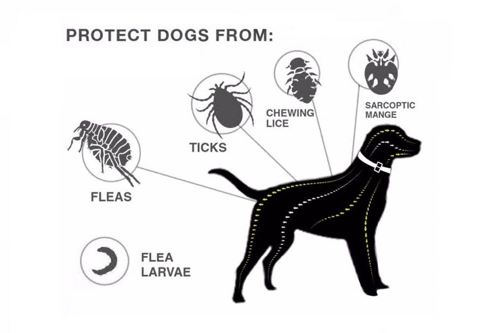 protect your pet from insects