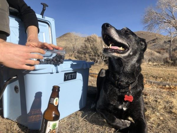 camping coolers Specific Features