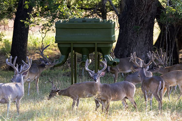 How to Choose a Deer Feeder