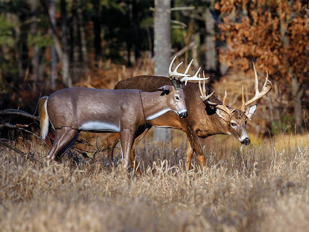 When Should You Use a Deer Decoy