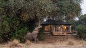 Glamping Wildlife Encounters